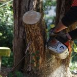 Assured Tree Services Perth