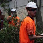 Tree Pruning Perth